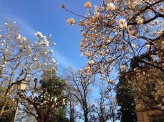Lucca in spring