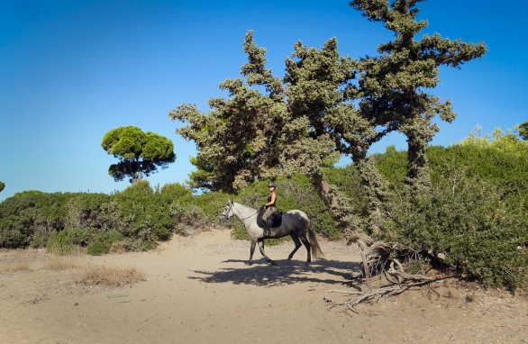 ridingonthebeach